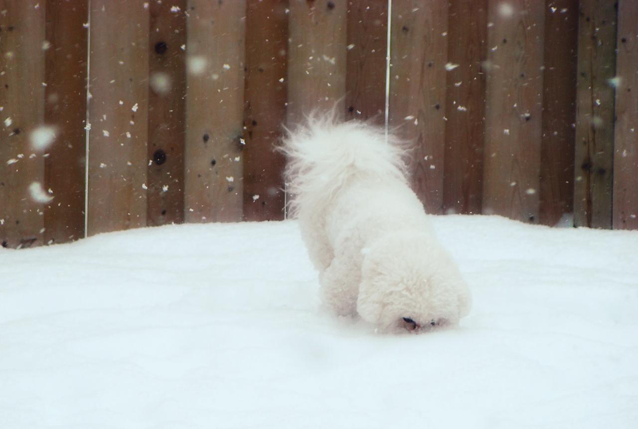 Fresh Snow 1-365
