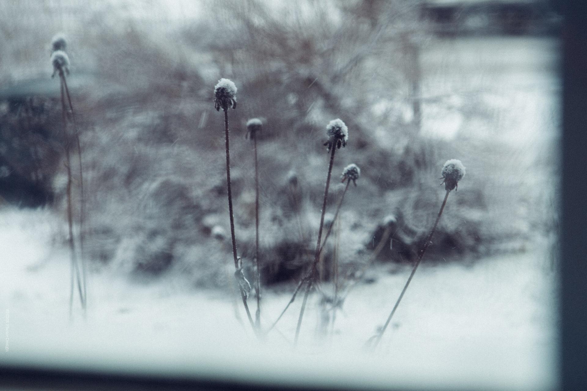 SHINE - Through a Window