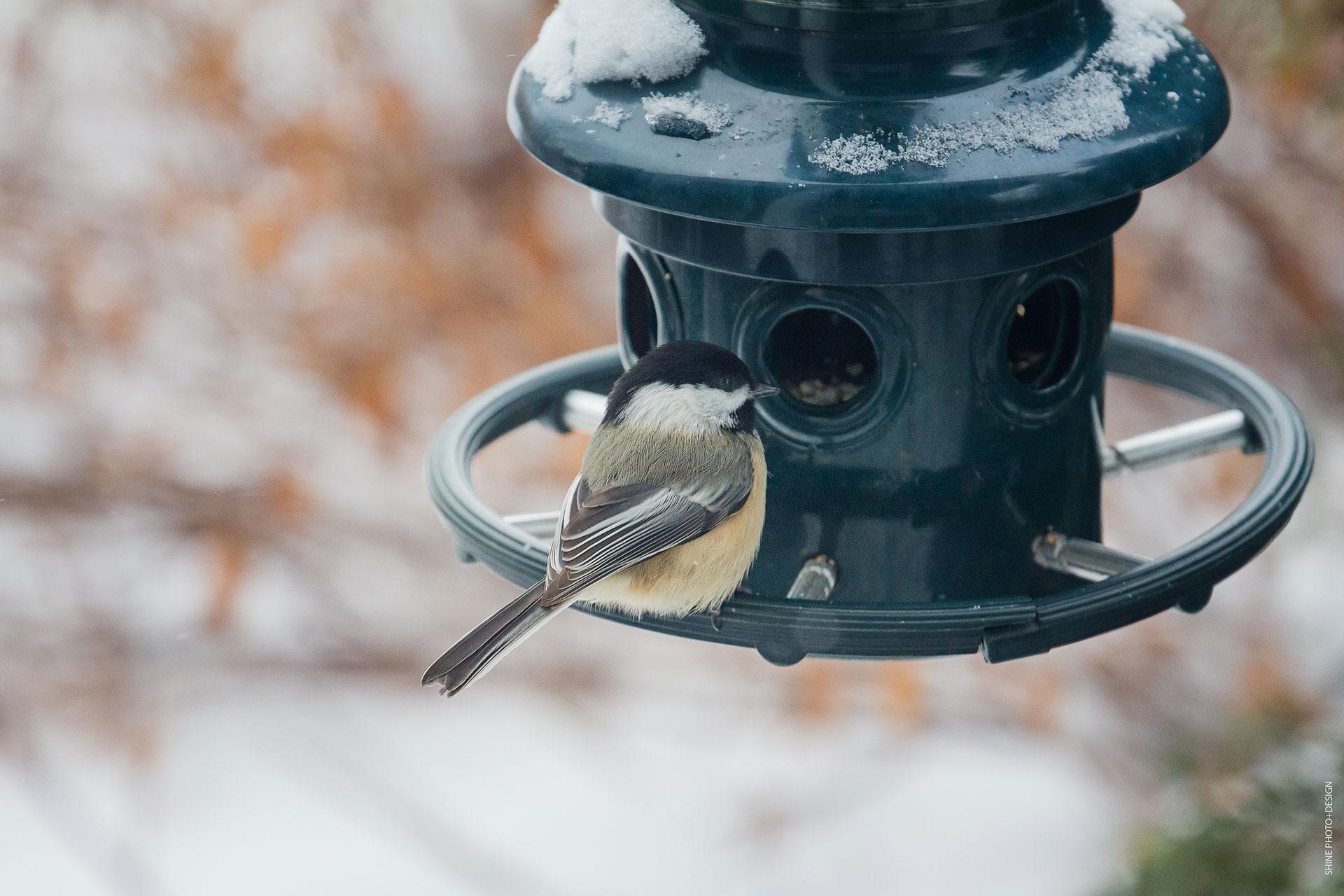 Bird by SHINE PhotoDesign