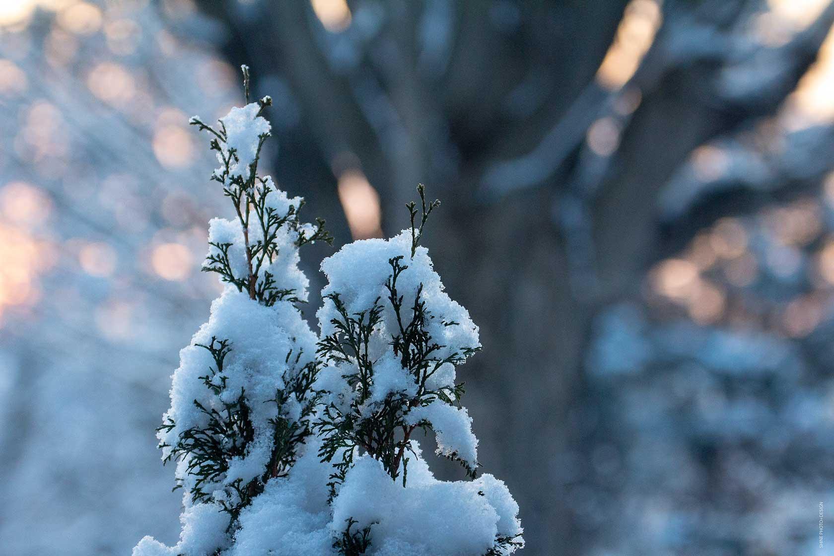 snowscape by SHINE Photo+Design